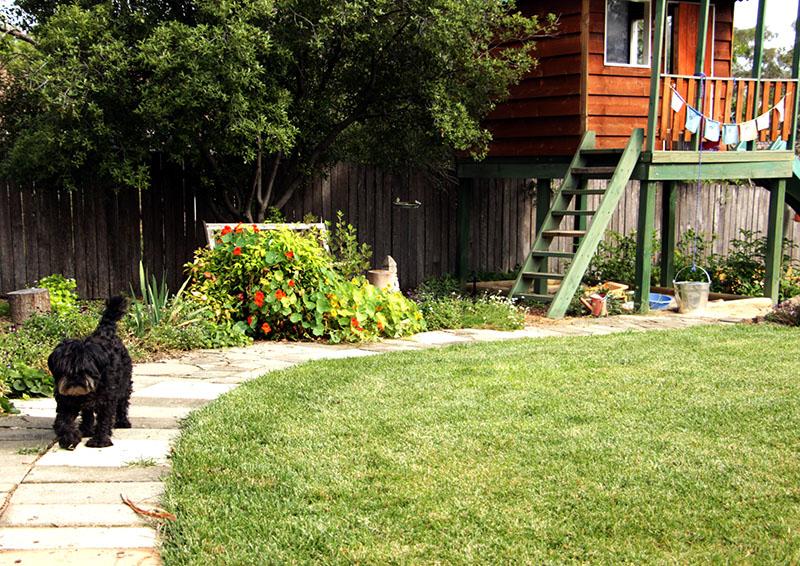 summer garden wookie