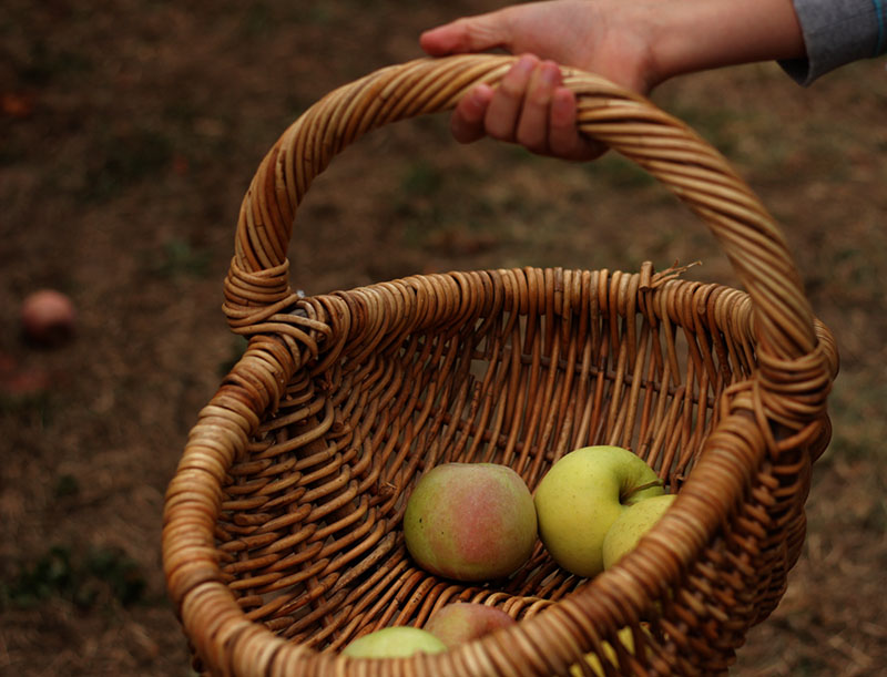 apple picking basket