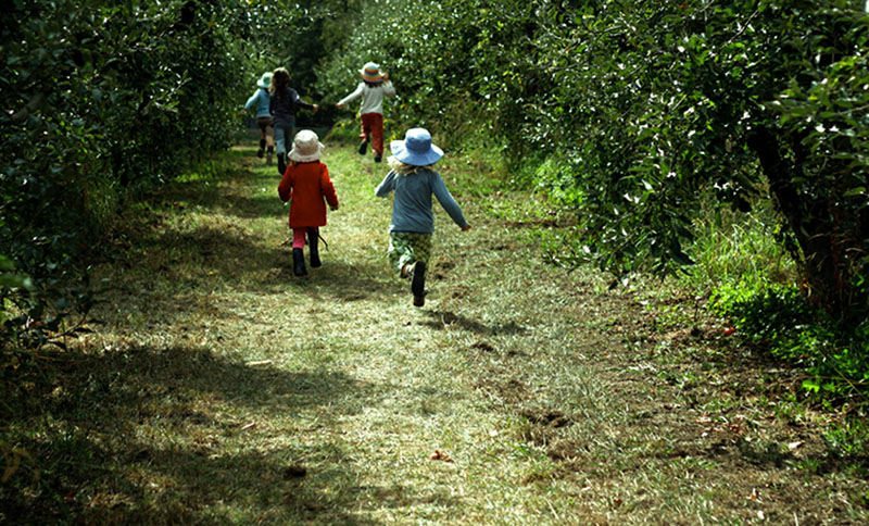 children at the apple orchard